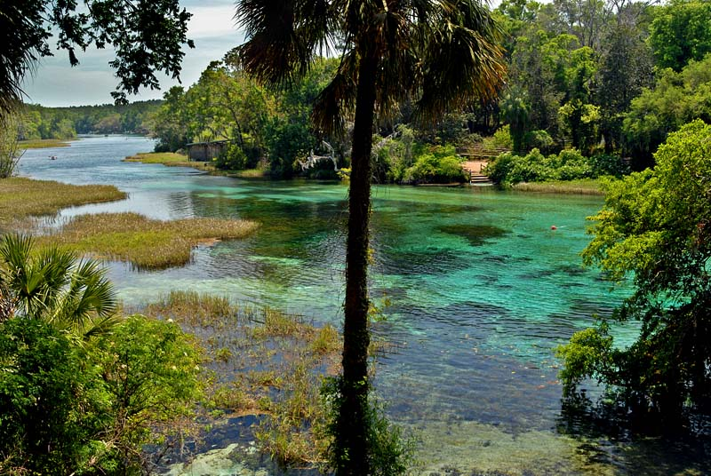 Rainbow River Florida Ocala Florida Arcadia Florida - Rivers in florida